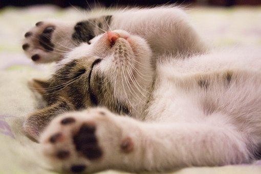 あなたも睡眠負債かも?睡眠負債の気になる症状と解消法