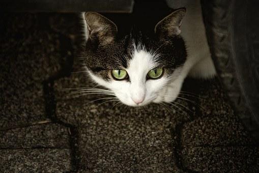 今、話題の猫カフェMOCHA 立川店のパルボウイルス事件