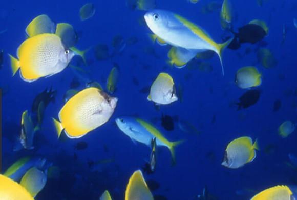 ゴールデンウィークに日本一の星空、イルカと泳ぎ、ジャングル探検してみませんか?