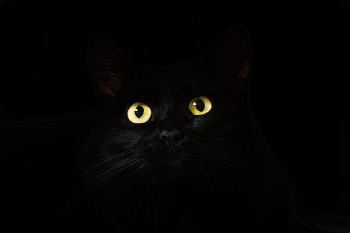 子猫の命を救う活動TNRを知っていますか?